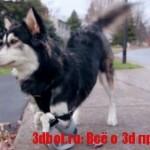 Протез для собаки сделали на 3d принтере