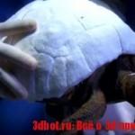 Распечатанный на 3D принтере панцирь для черепахи