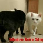 Коты с протезами из 3D-принтера ищут хозяев