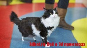 Бионические протезы для кота