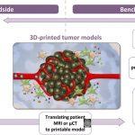 3D-печатная модель раковой опухоли